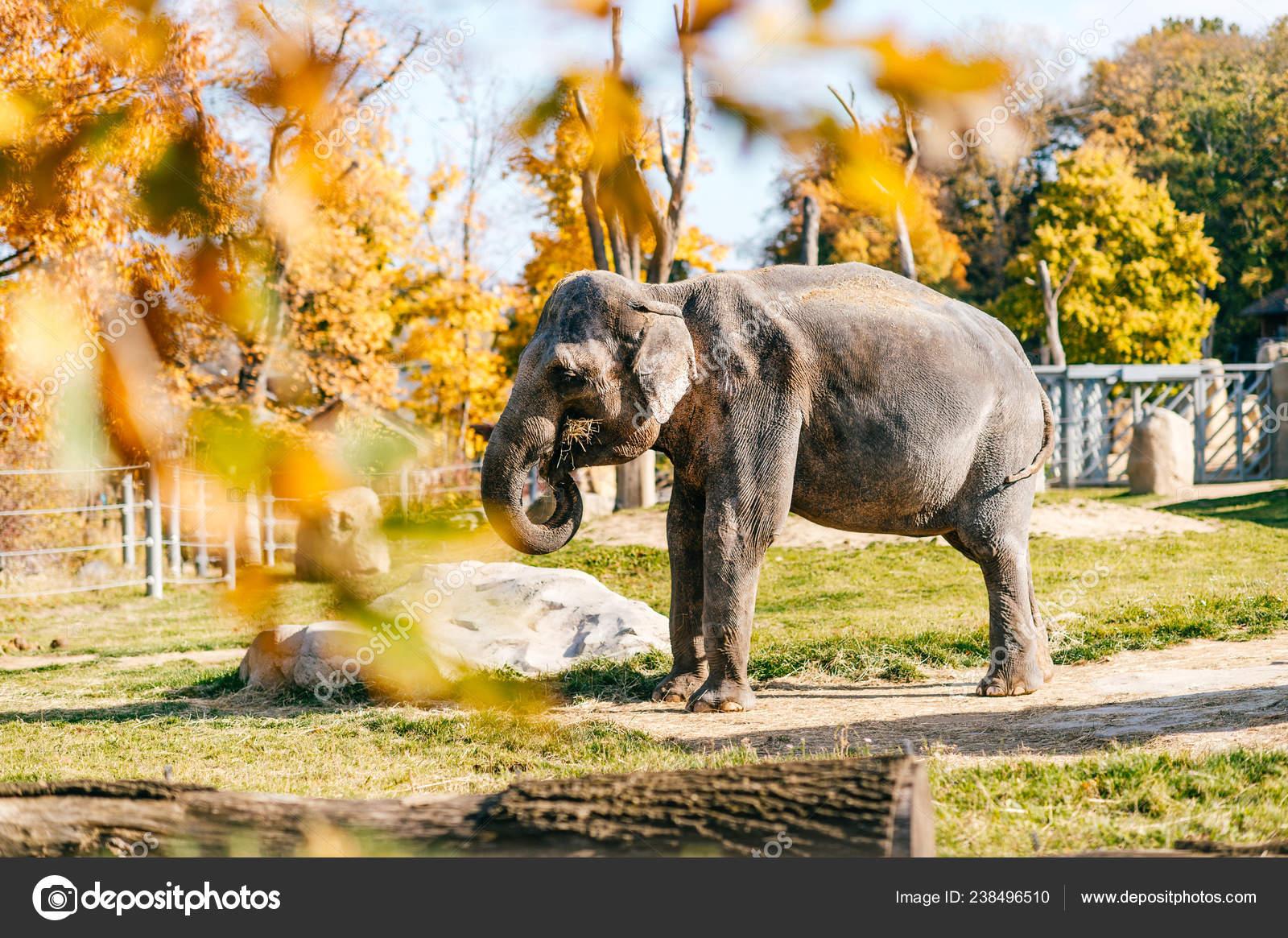 Elephant Natural Habitat Africain Autumn Southern Safari Park Stock Photo C Hplovecraft Mail Ru 238496510