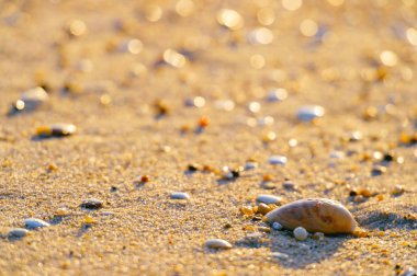 Close up view of sand with stones and seashells on beach stock vector