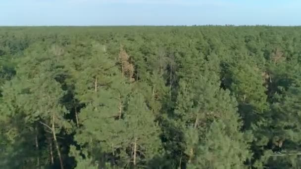 Drone forest shot. Flying extreme close to the trees. Late summer or early autumn.
