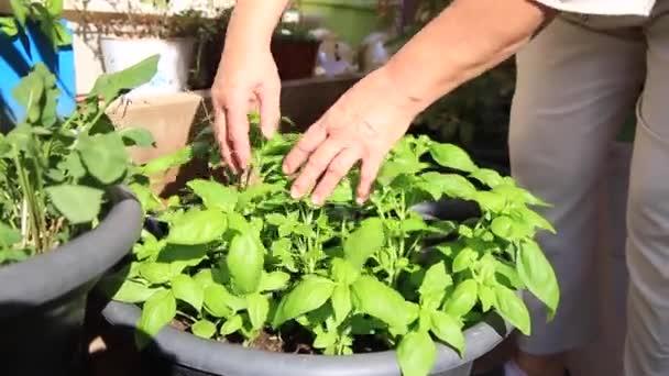 Dívka, péče o domácí rostliny, koření.