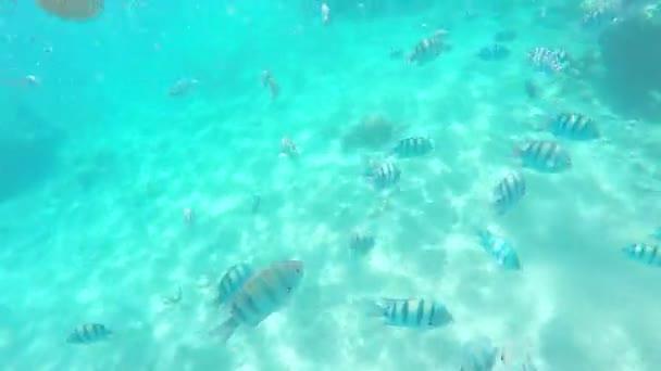 Mutter und Sohn tauchen mit Masken im klaren Wasser zwischen vielen Fischen