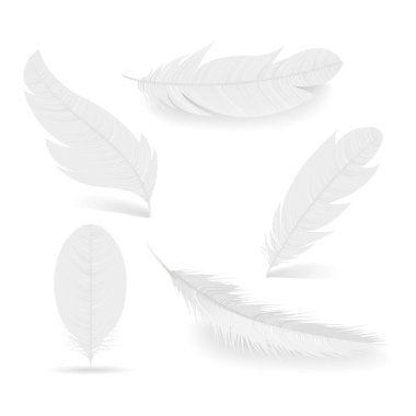 White feathers collection. Symbol of lightness, innocence, hope and heaven. Various shapes of Angel or bird detailed feathers. Realistic vector isolated illustration on a white background.