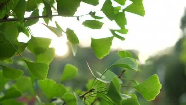 paprsky slunce prolomit zelené listy