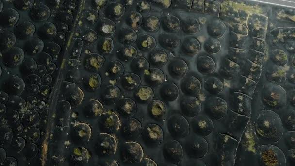 Weinberge auf vulkanischem Boden auf Lanzarote, Kanarische Inseln