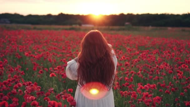 Red-haired woman throws her hair up standing in field of poppies in rays of setting sun, rear view