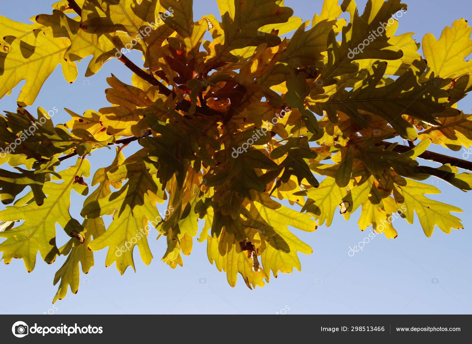 Latar Belakang Musim Gugur Warna Alam Latar Belakang Colorful Autumn — Stok  Foto © Stepunina.gmail.com #298513466