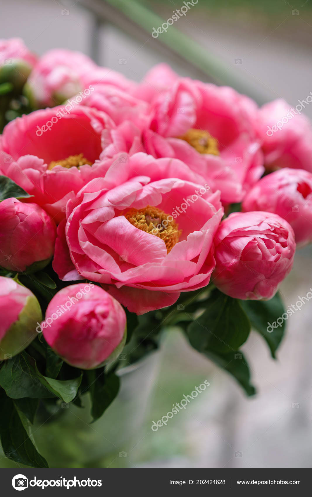 Pink Peonies Beautiful Summer Bouquet Floral Composition