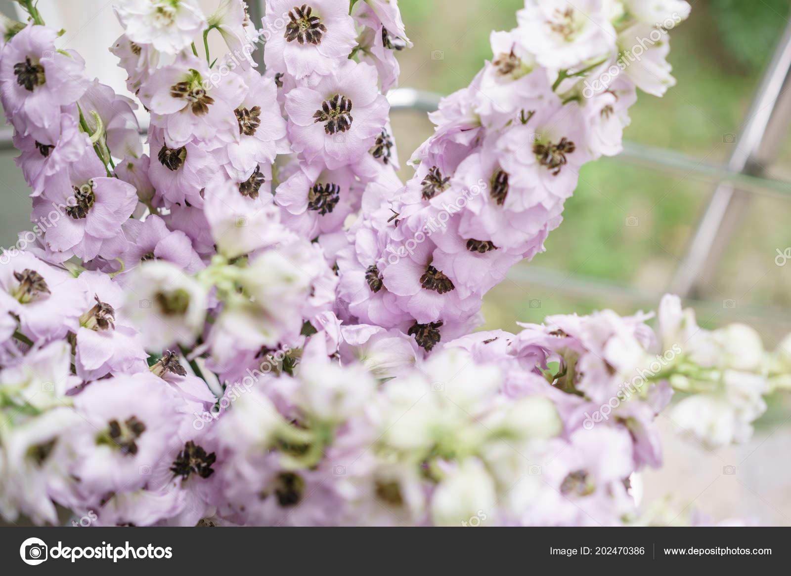 Carta Da Parati Fiori Minimal : Delphiniums lilla in vaso di vetro sul tavolo grigio. carta da