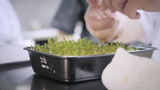 closeup green sprouts on table. Group chefs busy in commercial kitchen of restaurant. Staff in a restaurant or hotel kitchen cooking delicious food, they is decorating the dishes
