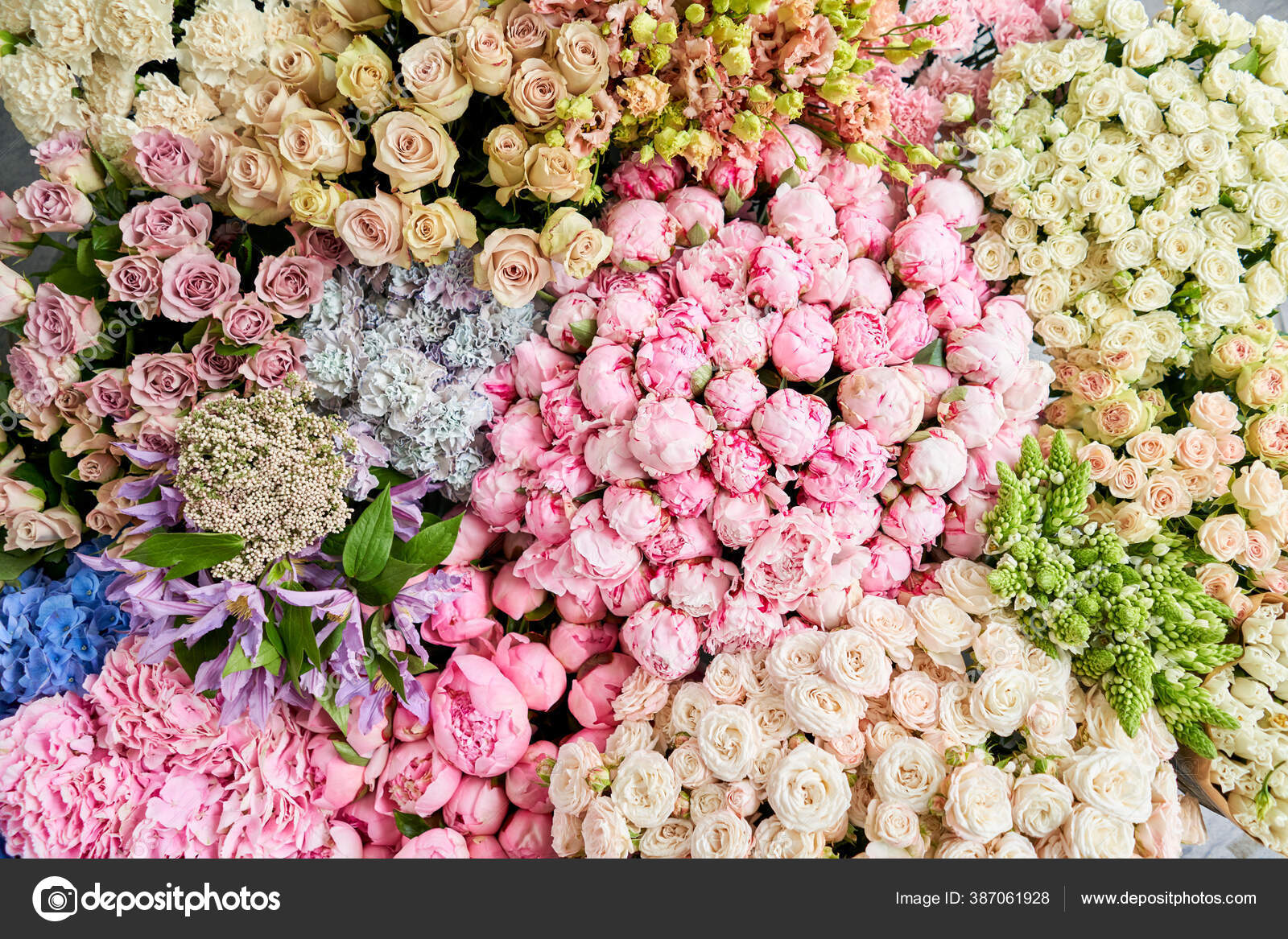 Karpet Bunga Atau Wallpaper Latar Belakang Campuran Bunga Bunga Indah Untuk Katalog Atau Toko Online Toko Bunga Dan Konsep Pengiriman Pemandangan Bagus Salin Ruang Stok Foto C Malkovkosta 387061928