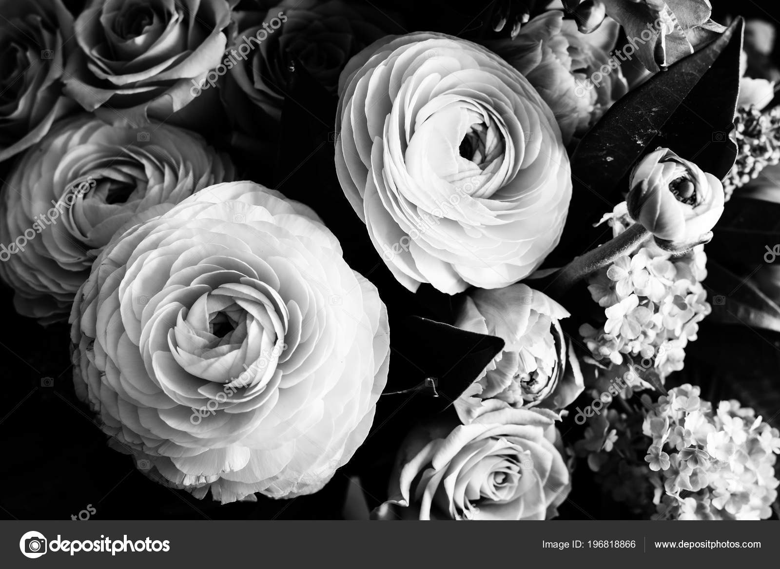 Bouquet Of Ranunculus And Roses In Black And White Close Up Stock