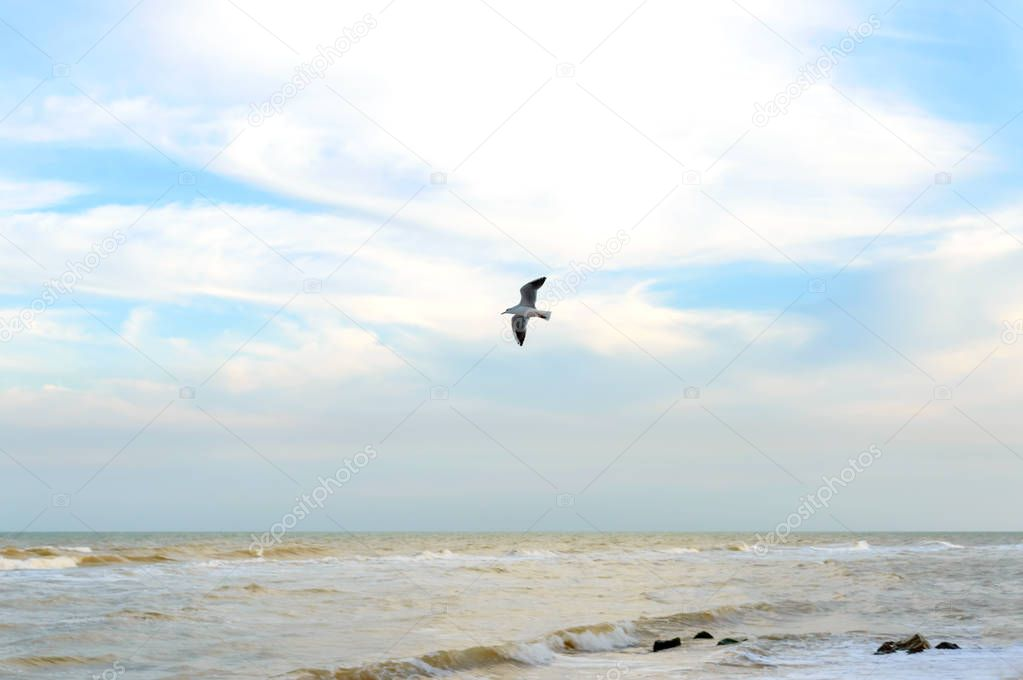 Waves on the shore. Sea wave on a sandy beach with sunlight and seagull on blue sky. Seascape