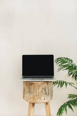 Front view of laptop on wooden stool and tropical palm tree. Lifestyle blog hero header. Creative blog or social media background.