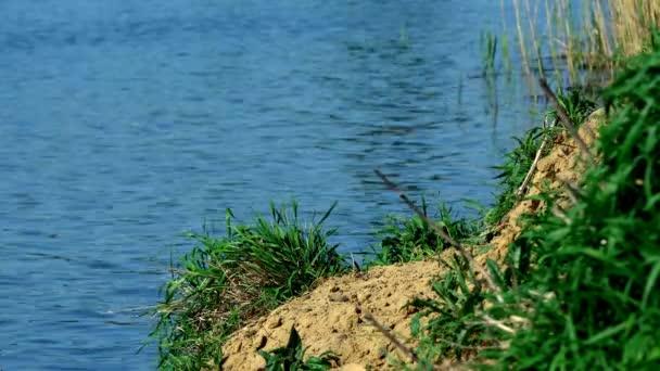 Ég és rohan tükrözik a tó víz. Nád nő ki a víz, hullámzó tükörképét a vízben