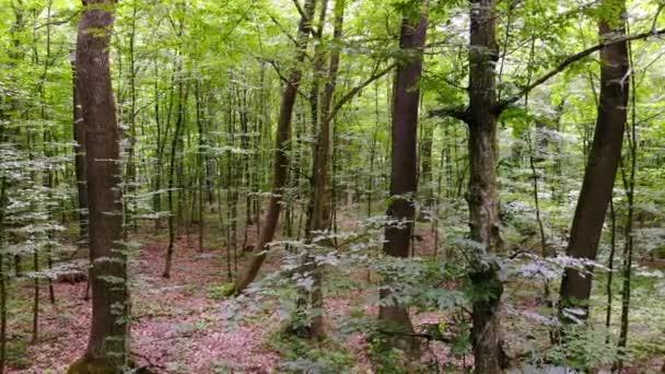 Pohyb kamery v lese. Pohyb kamery uvnitř lesa. Mladé jarní les s zelené listí v jasný teplý den.