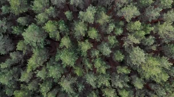Forest landscape from above. 4K The flight of the camera over the pine forest. Slow smooth movement of the camera along the thick forests of the forest.