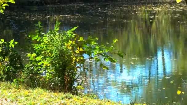 Padající barevné podzimní listí překryvný obrázek cesty zalesněné lesní stezku