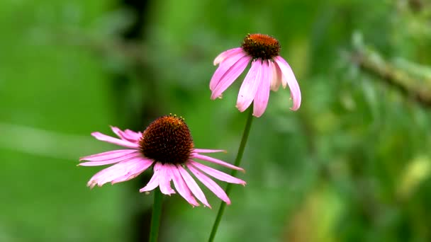 Krásné luční květiny, čerstvé zelené louky a kvetoucí květiny. Fotoaparát, pohybující se po horské louky s barevnými květy