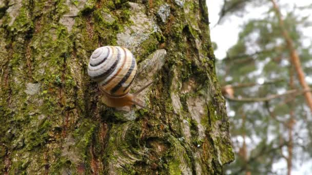 A snail waking up after the winter cold creeps on a tree on a warm day