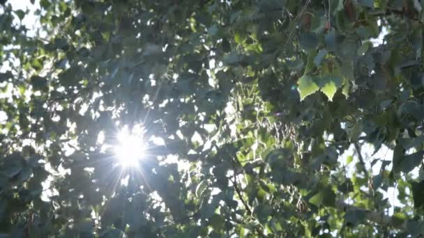 Nature sunny green background with shining sun behind branches. Organic backdrop with sun rays and sunbeams bursting through leaves. Real time 4k video footage.