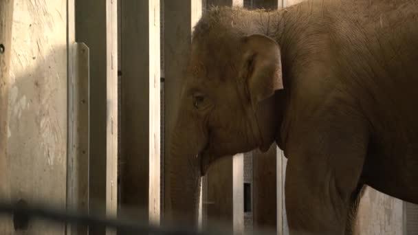 Elefánt az állatkertben eszik