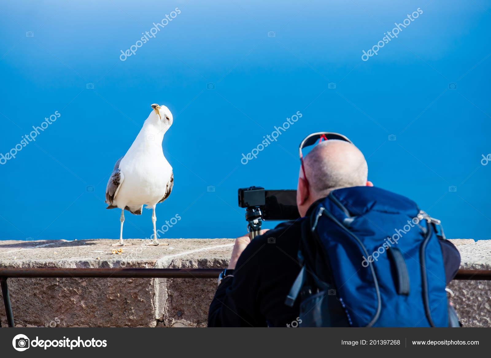 Obrázky mans ptáků