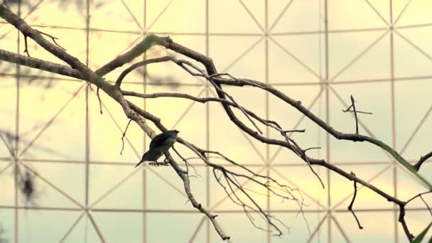 Sziluettek a madarak, a háttérben a tó. Reggeli a nap sugarai tükröződnek a víz. A madár mosott, és csiszolt tested.