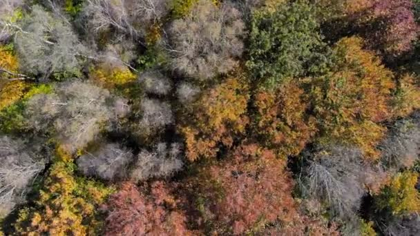 Aerial Footage View. Flight over autumn mountains with forests, meadows and hills in sunset soft light. 4K