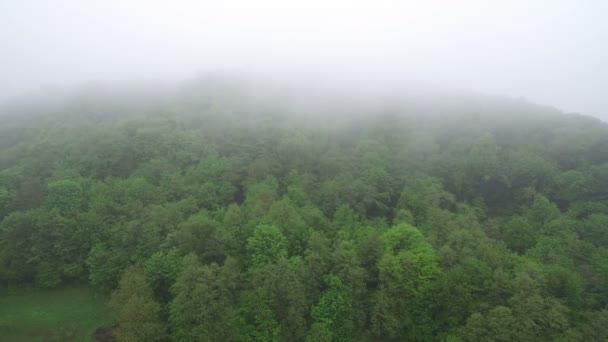 Aerial Flight over the tops of trees in the misty morning. Morning in the woods, the green forest is covered with fog.