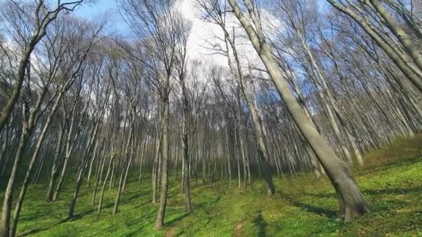 Background of trees in the forest. Panorama of trees on the wide angle of the lens . Forest glade, with green grass and tall trees