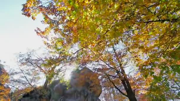 Az őszi nap átsüt a leveleken és a kősziklán. Mozgó kamerák és pillantás alul a felső kézben őszi leveleken a fán