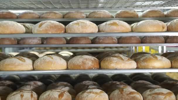 Pékipari termékek gyártása. Frissen sült pirított kenyér fekszik a pékség polcain. Sok kenyér van a pékség polcain..