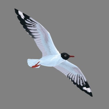 Realistic bird Seagull flying isolated on a grey background. Vector.