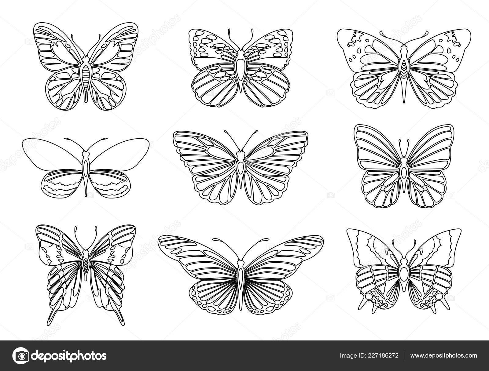 Conjunto De Mariposas Para El Elemento De Diseño Y Adulto O