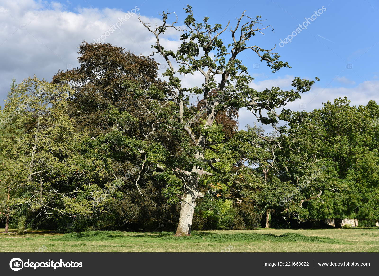 Áˆ Crooked Stock Images Royalty Free The Crooked Man Pictures Download On Depositphotos