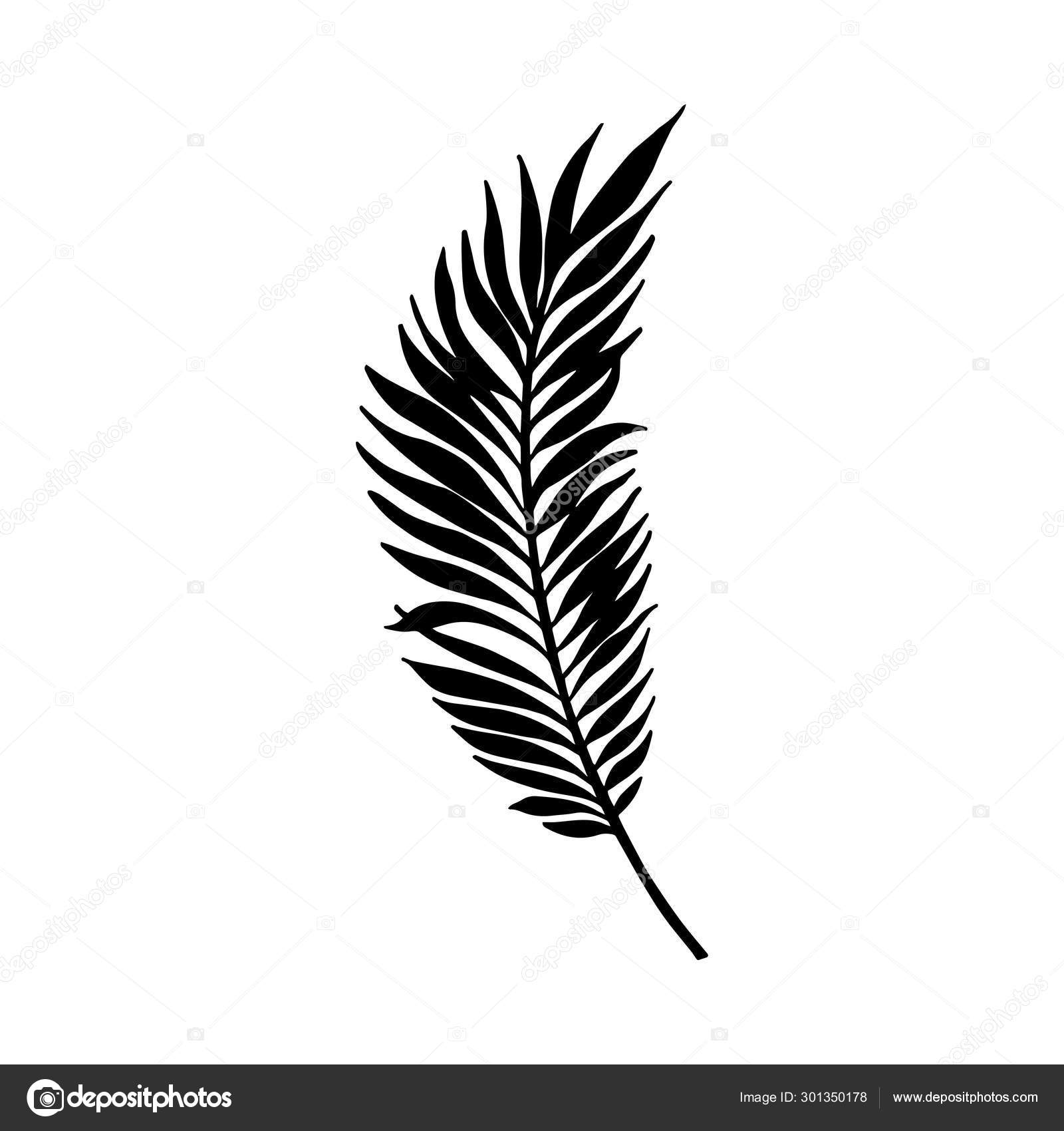 Tropical Leaves Black Leaves Palm Fan Palm Banana Leaves Vector Illustration Stock Vector C Sergii19 I Ua 301350178 Beautiful seamless vector floral pattern background with tropical palm leaves, jungle leaves. tropical leaves black leaves palm fan palm banana leaves vector illustration stock vector c sergii19 i ua 301350178