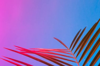 Tropical leaf in vibrant bold gradient holographic neon colors, Concept art, Minimal surrealism background