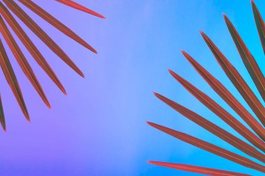 Tropical and palm leaves in vibrant bold gradient holographic neon  colors, Concept art, Minimal surrealism background