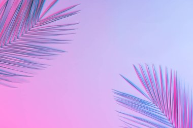 palm leaves in vibrant bold gradient holographic neon colors, Concept art