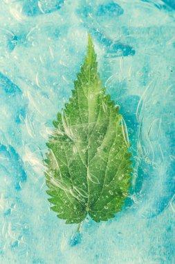 """Картина, постер, плакат, фотообои """"зеленый натуральный лист в воде или холодном напитке. концепция здорового питания. минимальный природный фон. плоский лежал . фото"""", артикул 208504204"""