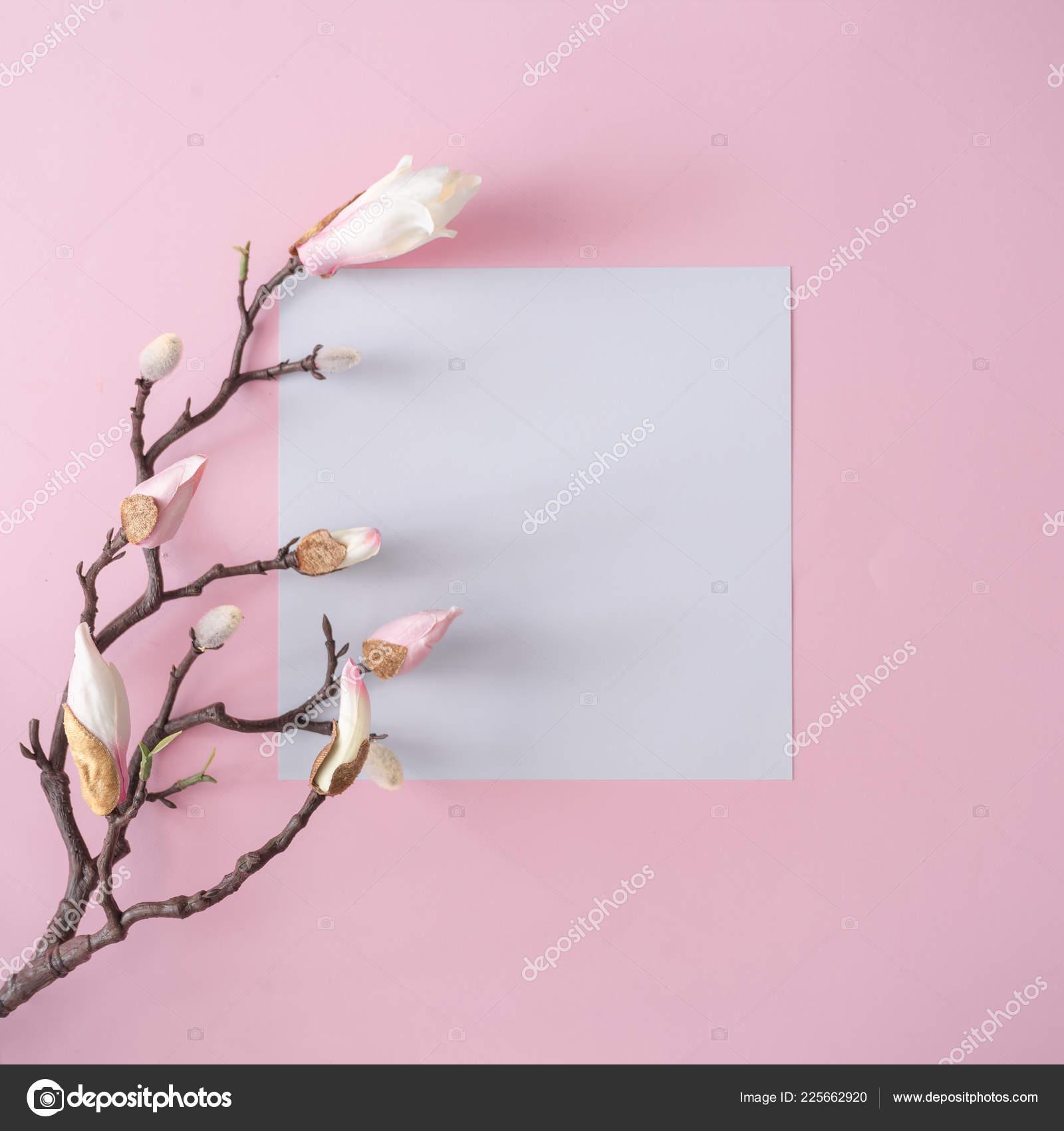 Zweig Mit Weißen Blüten Und Papier Karte Hinweis Auf Pastell
