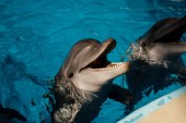 Photo portrait of bottlenose dolphin sin blue water. Dolphin Assisted Therapy