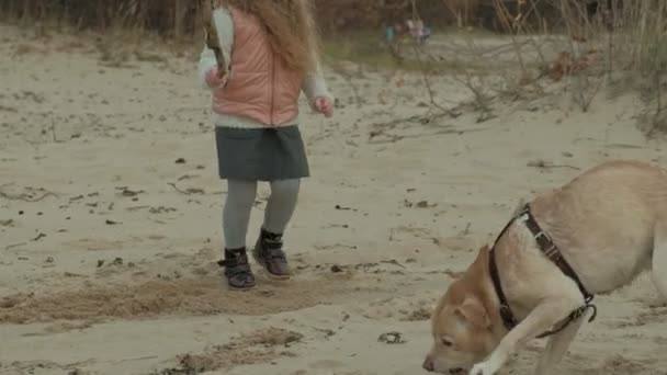 girl with curly hair in warm clothes, runs, plays with a brown dog on the beach, throws her a stick, cold weather