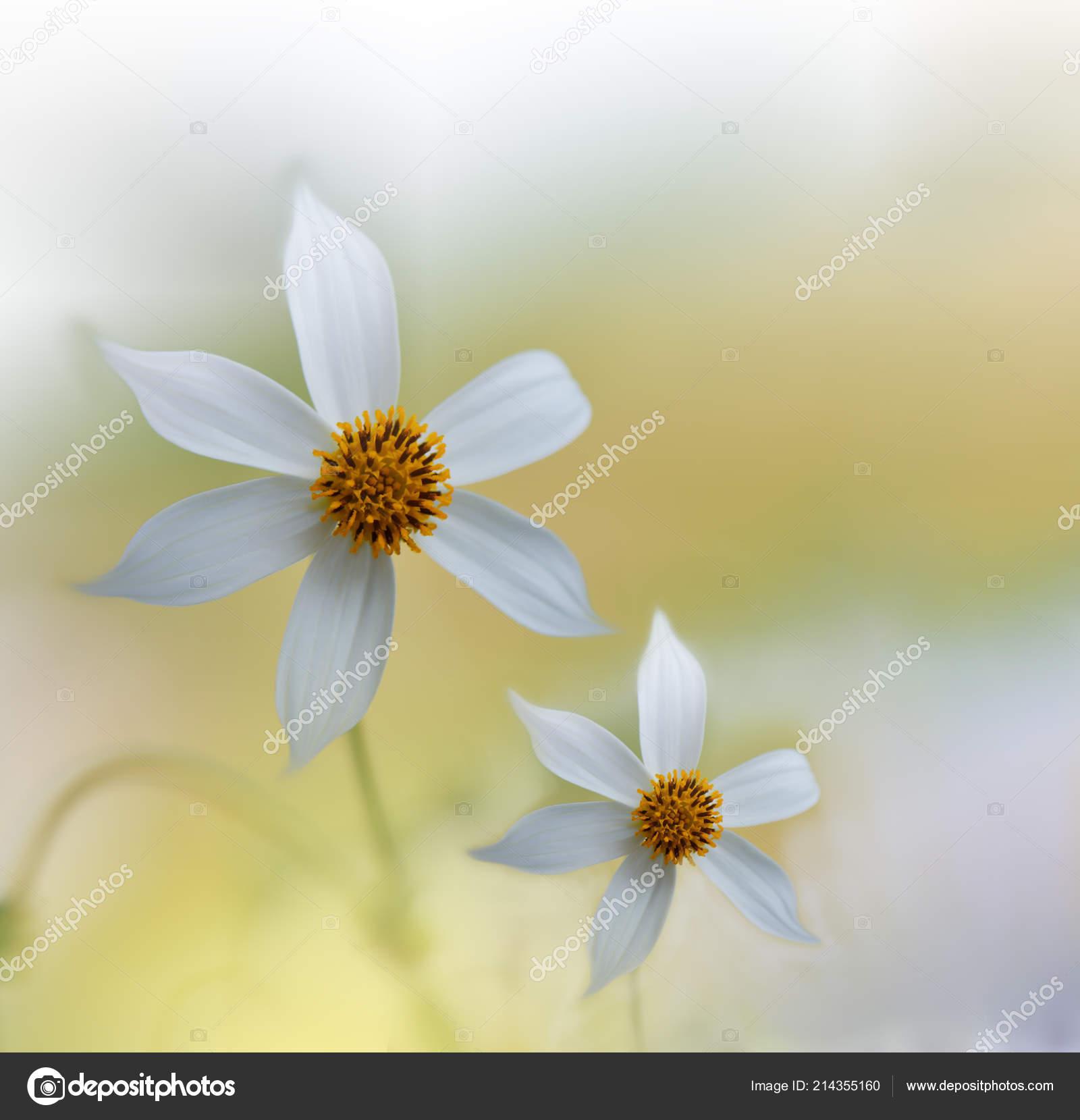 Romantic Flower Invitation Greeting Card Floral Fantasy Design White Background Stock Photo C Art Juli Abv Bg 214355160