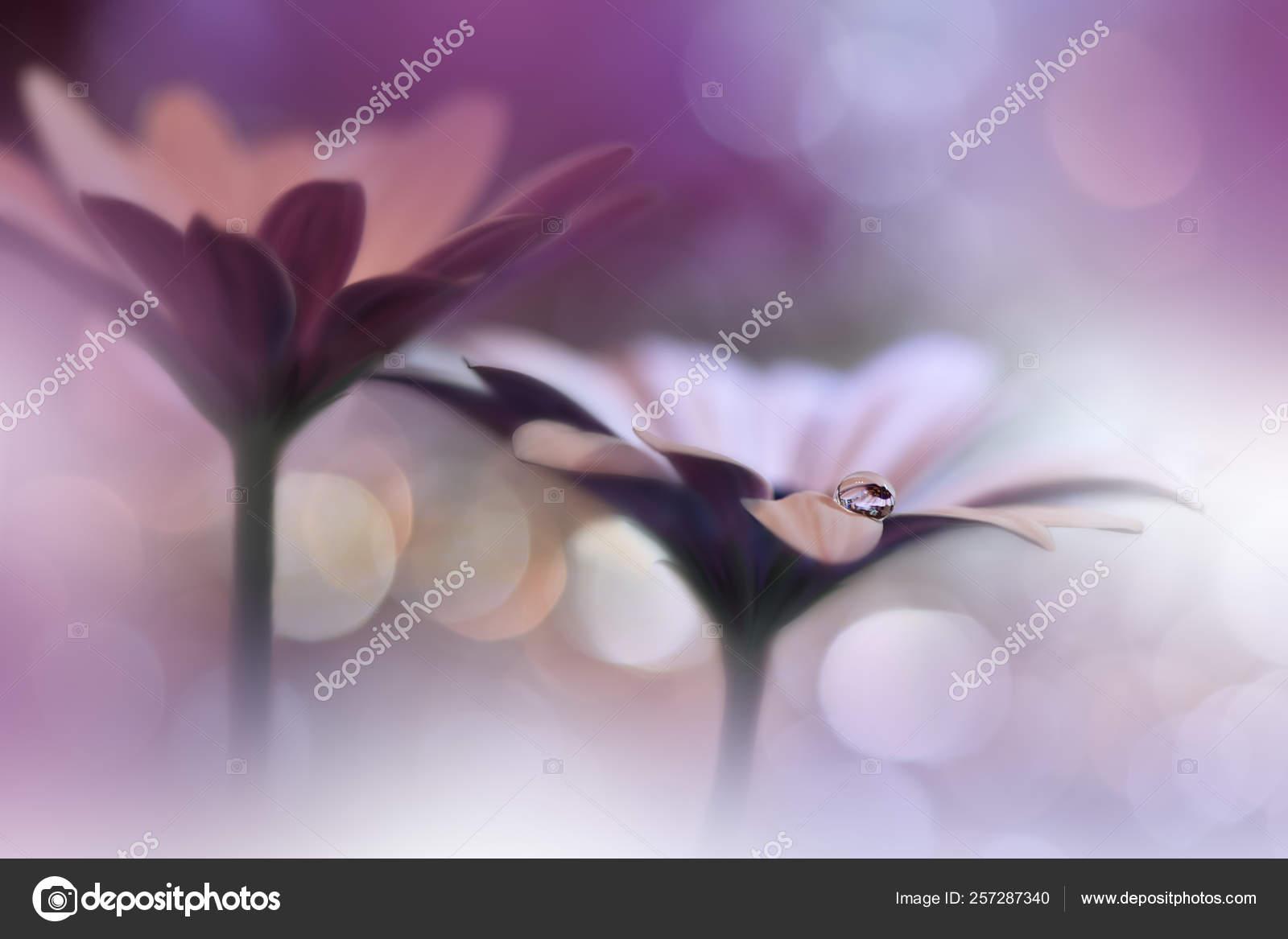 Beautiful Macro Shot Magic Flowers Magic Light Extreme Close