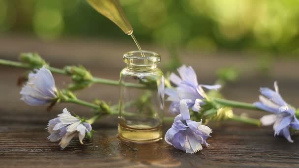 chicory essential oil in  beautiful bottle on table