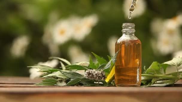 motherwort essential oil in  beautiful bottle on table