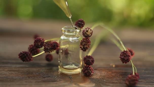 great burnet essential oil in  beautiful bottle on table