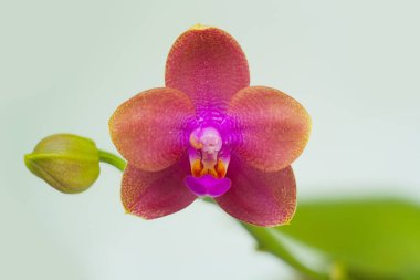 Beautiful rare orchid in pot on blurred background