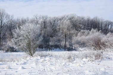 Beautiful winter landscape in clear weather. Seasons, nature